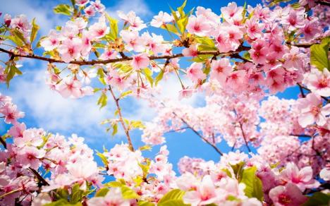 Festivalul primăverii îi aduce la Oradea pe dirijorii Tiberiu Soare şi Ciprian Marinescu