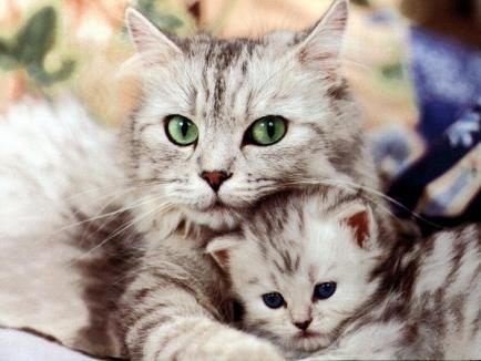 Iubitorii de pisici, rugaţi să sprijine singurul adăpost de feline din Oradea, ca să nu-şi închidă porţile