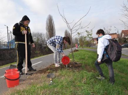 Cercetaşii orădeni, la plantări de arbori pe malul Peţei (FOTO)