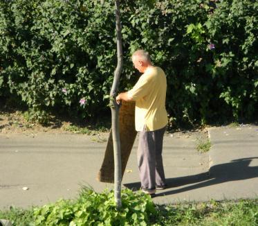 Pentru unii orădeni, copacii sunt bătătoare de covoare