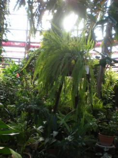 Poftiţi în lumea plantelor! (FOTO)