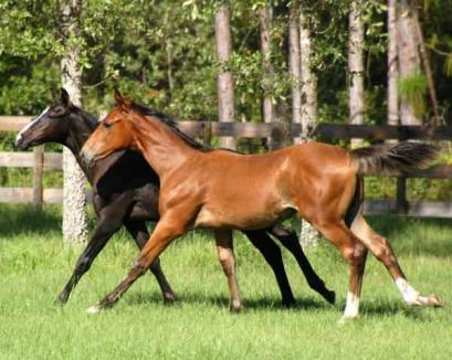 Transport clandestin de cai descoperit în Borş