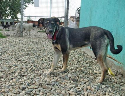 În premieră, în Oradea va avea loc un târg de adopţie a câinilor comunitari