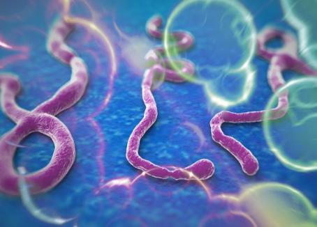 OMS: Epidemia de Ebola avansează mai rapid decât eforturile de a o controla
