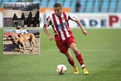 """""""Faraonul"""" nu se lecuieşte: Fotbalistul Ramses Gado, trimis din nou în judecată pentru lupte ilegale între câini"""