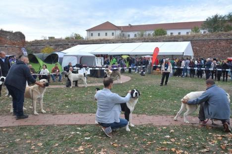 Parada câinilor, în Cetatea Oradea: Halloween Dog Show! (FOTO / VIDEO)