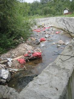 Natura batjocorită în Chişcău: Gunoaiele zac pe râul Crăiasa