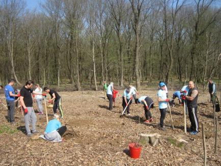 Luna plantării arborilor: 36 de hectare au fost împădurite în Bihor (FOTO)