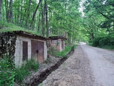 Satul ascuns: BIHOREANUL vă prezintă viața în satul Loranta, care numără doar 16 locuitori! (FOTO / VIDEO)