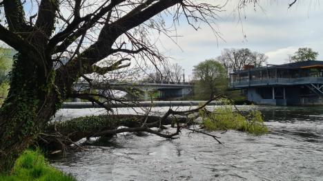 Lăsaţi Crişul verde! Primăria Oradea pregăteşte defrişări în 'plămânul' verde din centrul oraşului, în ciuda opoziţiei ecologiştilor (FOTO)