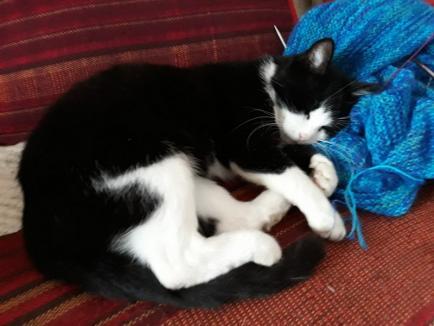 Stăpâna Cetăţii: Cum a ajuns pisica Mici cea mai îndrăgită locatară din Cetatea Oradea (FOTO)