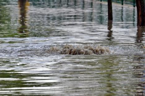 Oradea la apă: După fiecare ploaie torenţială, Dispeceratul CAO este asaltat de reclamaţiile orădenilor revoltaţi de inundaţii (FOTO)