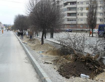 Pomii de pe bulevardul Dacia se mută la OBI