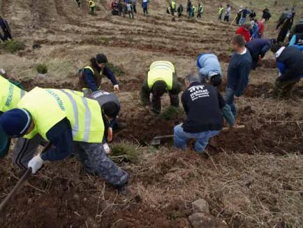Peste 600 de voluntari au plantat mii de copaci la Roşia