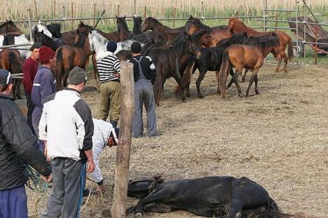 Ipoteză şocantă: Englezii cred că în farfuriile lor au ajuns caii chinuiţi din Pădurea Letea
