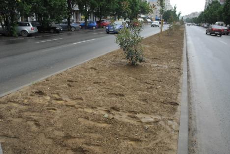 Scuarul din Bulevardul Dacia, distrus deja de orădenii care-l calcă în picioare