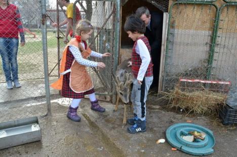 Zoo în curtea şcolii: La Centrul Don Orione, picii orădeni pot face cunoştinţă cu raţe, gâşte, iepuraşi, dar şi un căprior! (FOTO)