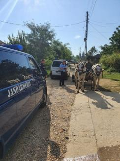 Vitezomani, şoferi băuţi sau fără permis, dimineaţa pe şoselele din Bihor. Ce 'capturi' au făcut poliţiştii în două ore (FOTO)