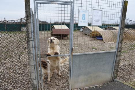 Grivei... în creştere: Adăpostul Grivei din Oradea va prelua câini fără stăpân din tot judeţul (FOTO)