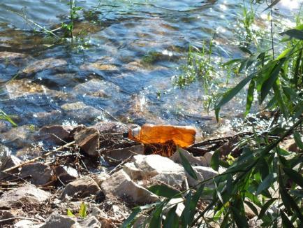 De Ziua Mediului, filosofii orădeni au dat o lecţie despre respectarea naturii (FOTO)