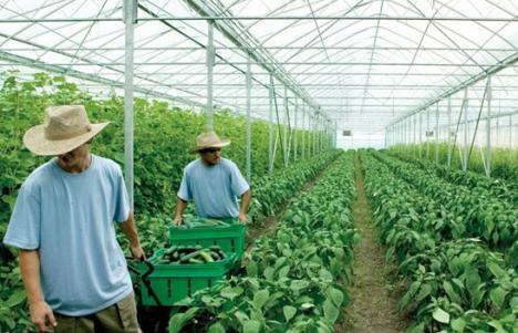 O firmă din Danemarca, în căutare de muncitori în Bihor