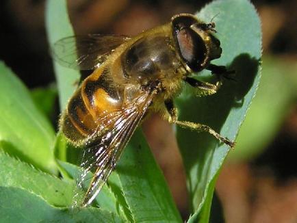 Un bărbat a murit după ce a fost înţepat de o insectă