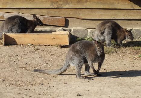 Noi animale la Zoo Oradea : Printre ele, o specie rară de lemuri (FOTO)