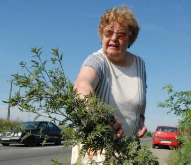 Doamna Marossy îşi serbează cei 80 de ani, la un simpozion naţional pe teme de ecologie şi religie