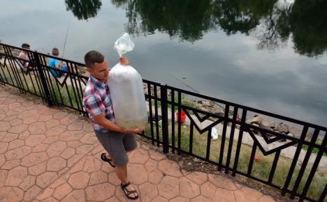 Crişul Repede... la somn: Aqua Crisius a populat râul cu 5.000 de puieţi de somn (FOTO)