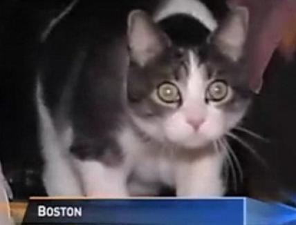 O pisică a fost chemată să fie jurat într-un proces