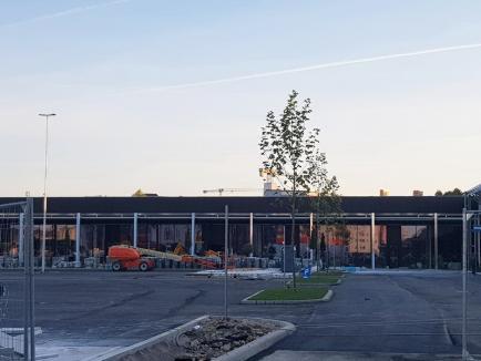 Se poate: În șantierul celui mai nou mall din Oradea au fost plantați copaci înainte de finalizarea lucrărilor (FOTO)