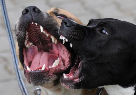 Trei orădeni, amendaţi de jandarmi pentru că îşi plimbau câinii fără botniţă