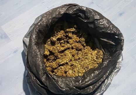 Percheziții la cultivatori de cannabis din Oradea: O armă, aproape 2 kilograme de droguri, materiale şi instrumente au fost confiscate (FOTO)