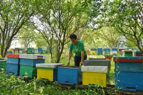 'Mama' albinuţelor: Una dintre puţinele femei apicultor din Bihor, Beatrice Tica produce anual sute de kilograme de miere naturală (FOTO)