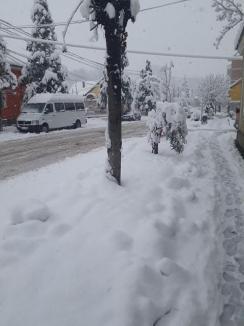 Zăpada face ravagii în Bihor: 79 de localităţi fără curent, peste 28.000 de cetăţeni afectaţi! (FOTO)