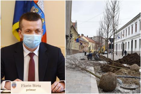 Alarmă falsă: Florin Birta lămureşte că pe strada Aurel Lazăr n-au fost plantaţi platani, ci arţari (VIDEO)