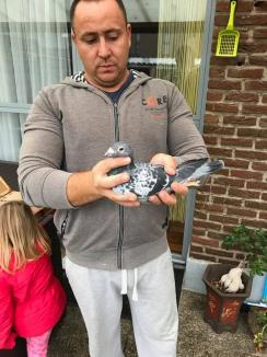 Campionatul porumbeilor voiajori: Samuel Bochiş, câştigătorul etapei de viteză de la Budapesta