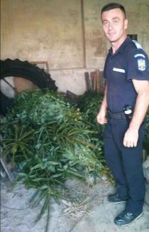 O fi cald, dar vine Crăciunul! 39 de brazi, confiscaţi de jandarmii din Padiş de la un bihorean (FOTO)