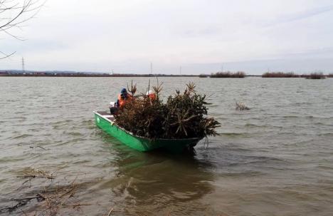 Inedit: Brazi 'plantaţi' pe fundul lacului de la Tileagd, ca să aibă peştii adăpost pentru icre (FOTO / VIDEO)