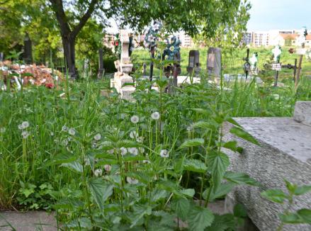 Ne enervează: Înainte cu câteva zile de Paștele Morților, buruienile din Cimitirul Municipal sunt mai mari decât mormintele (FOTO)