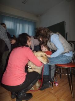 Doctorul Ham-Ham: Copiii cu deficienţe de la un centru special din Oradea sunt trataţi cu ajutorul câinilor (FOTO)
