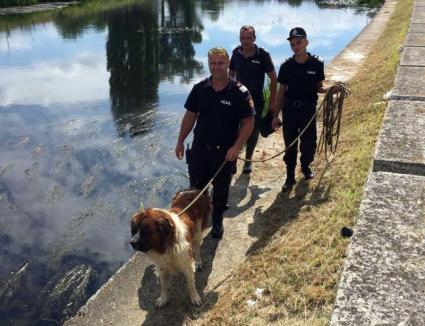 Un Saint-Bernard a fost salvat de pompieri din apele Crişului Repede. Stăpânul îl găseşte la adăpostul Grivei (FOTO)