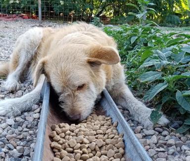 """Colectă pentru căţei: Adăpostul de câini """"Antonia Save Animals"""" din Salonta trebuie să se mute"""