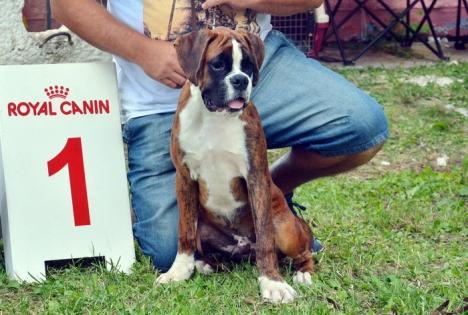 Oradea Dog Show: Peste 1.000 de câini din 15 ţări vor încerca să demonstreze că sunt cei mai frumoşi