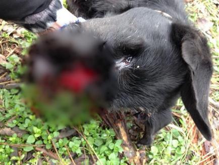 Șocant! Un poliţist din Bihor are dosar penal, după ce a ucis un câine! (FOTO)