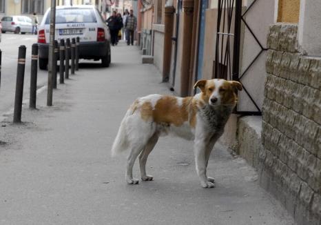 Primăria: Oradea este oraşul cu cei mai puţini câini fără stăpân din România, sunt circa 50 pe străzi