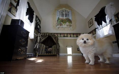 Cei mai răsfăţaţi câini de pe planetă (FOTO)