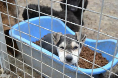 ADP susţine adopţia câinilor fără stăpân, punând la dispoziţie transportul gratuit