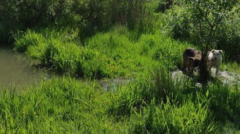 Revoltător! Câini lăsaţi să moară, într-un baraj din Bihor, după ce au fost legaţi de un copac (FOTO)