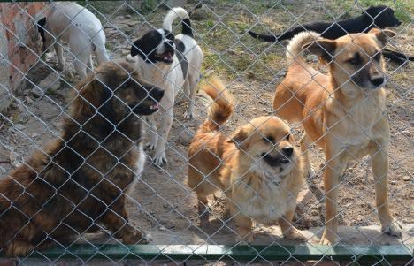 Iubitorii de câini, în alertă: Zeci de mii de oameni au semnat o petiţie împotriva mutării animalelor între localităţi, prevedere de care vrea să profite şi Bolojan